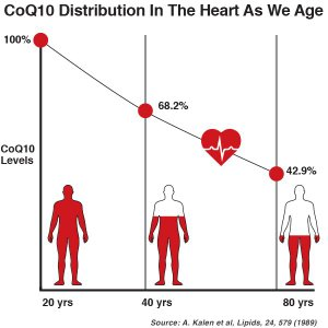 CoQ10 distrbution in the heart as we age